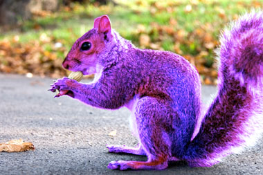 Specialization Is For Insects- Be a Purple Squirrel (1/2)