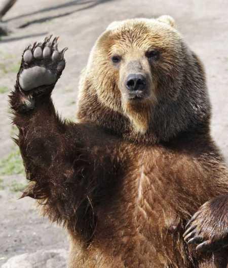 Wave bye-bye, bear.